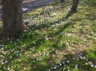 sakura2010_2.jpg
